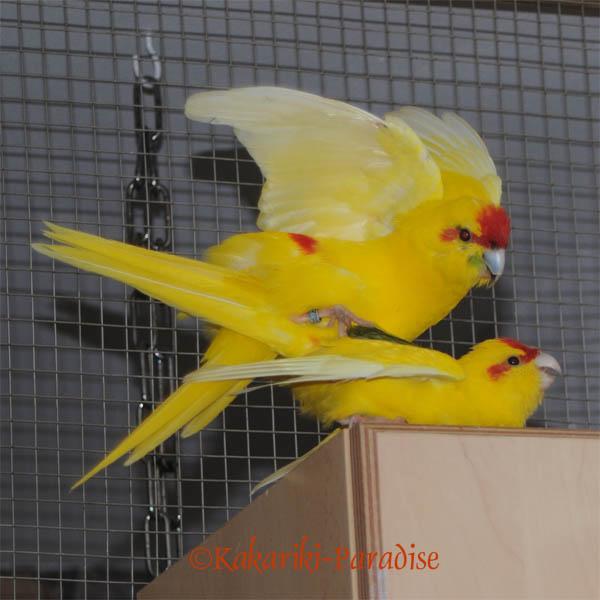 Bibo und Polly